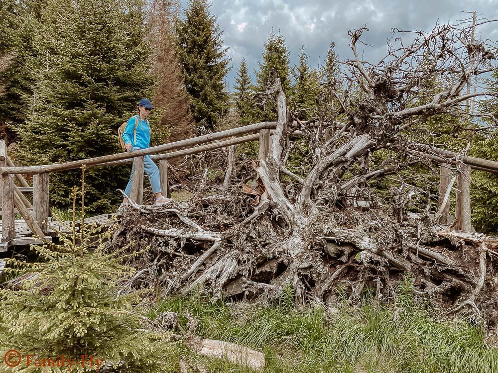 Moor Harz Wanderung